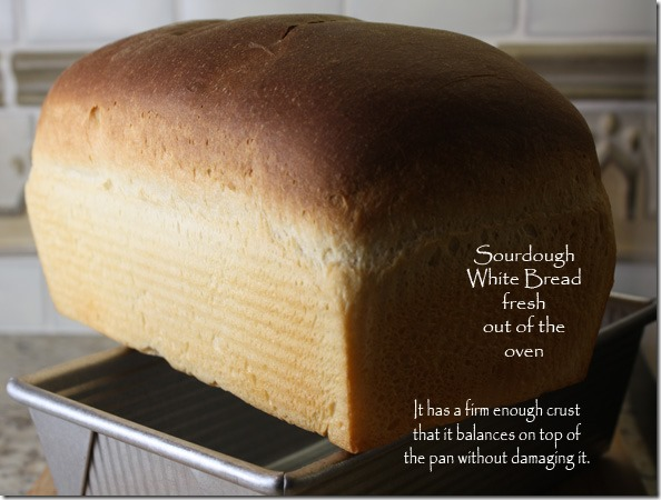 sourdough_white_bread_cooling