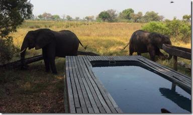elephants_by_pool_xaranna
