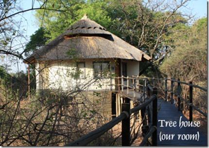 tree_house_room