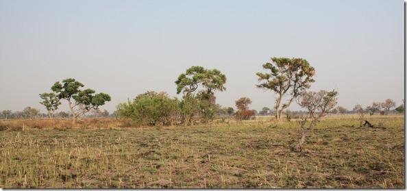 savannah_view1