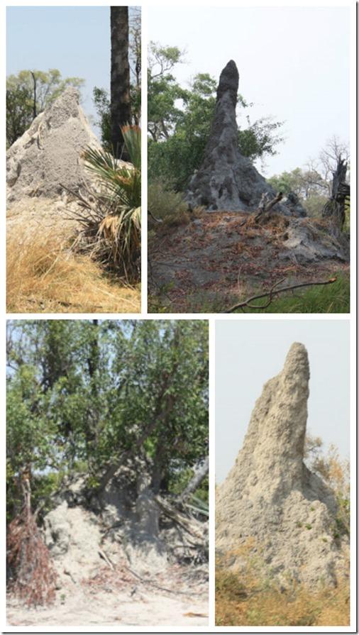 termitemound1
