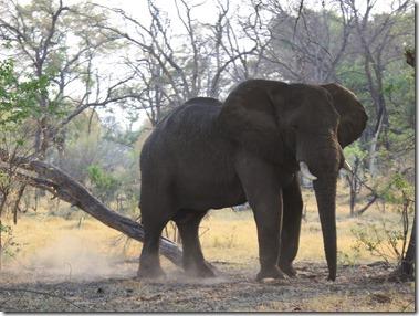 xudum_elephant_stomping