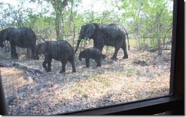 xudum_elephants