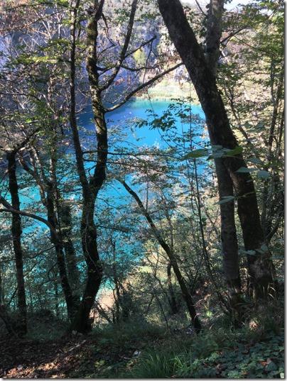 plitvice_lake_trees