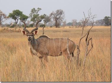 kudu3