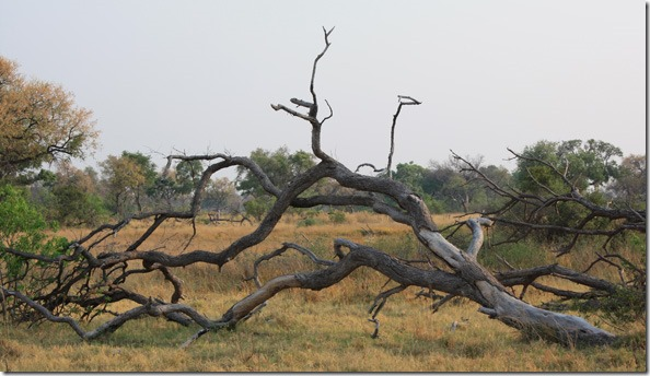 xudum_downed_tree